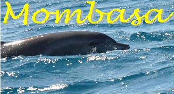 kenya safari, mombasa, dolphin tracking, tsaco west and east safari - mombasacitytours