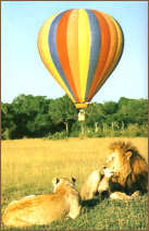 balloon safari2
