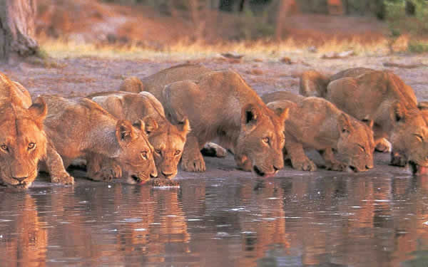 Best of Tanzania Safari and Zanzibar - lions