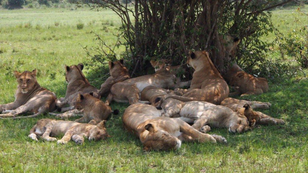 Masai Mara Photo Safari 3